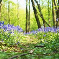 A sunny May morning in Lymington